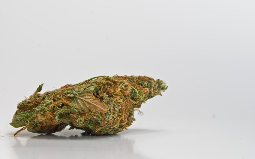 Anti-Marijuana Campaign Backfires
