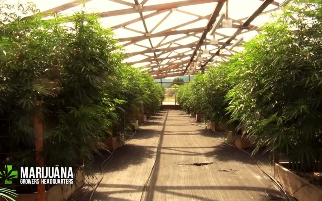 Denver Shuts Down Multiple Illegal Marijuana Grow Sites Across City