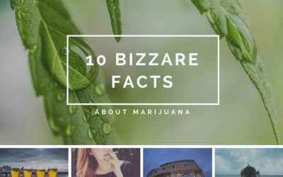 10 Facts About Marijuana You Never Knew