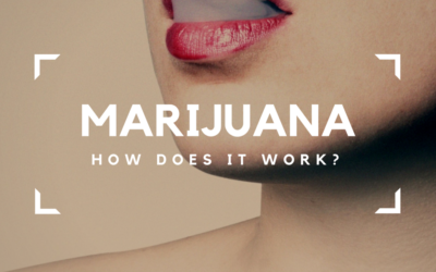 Marijuana in the Body and Brain